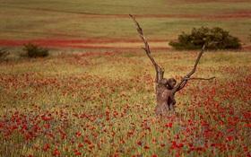 Khi những nghệ sĩ ẩn mình trong bức tranh thiên nhiên tuyệt đẹp