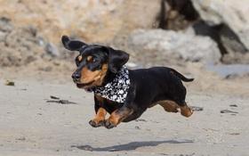 18 lý do để yêu thương những chú chó xúc xích lùn một mẩu Dachshunds