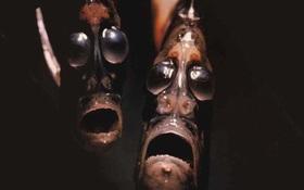 Gặp gỡ loài sinh vật quái dị có bộ mặt đến từ... địa ngục