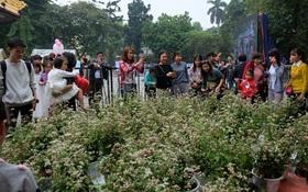 Người Hà Nội chen chân chụp ảnh hoa tam giác mạch tại phố đi bộ