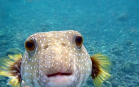 Điều gì sẽ xảy ra khi tất cả cá trong đại dương này biến mất?