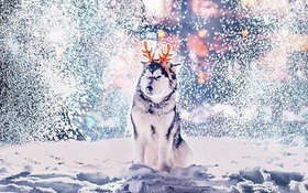 Ngỡ ngàng trước một Moscow mùa Giáng Sinh lung linh như truyện cổ tích