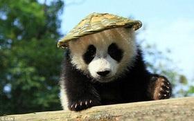 Tìm thấy Kungfu Panda bản photocopy còn yêu hơn cả bản chính