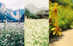 Tháng 11 đến rồi, nhất định phải đi Tây Bắc để hưởng cái lạnh và ngắm 3 loài hoa này