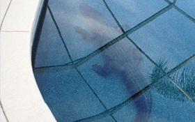 Hoảng hồn phát hiện cá sấu khổng lồ nằm chình ình dưới bể bơi của gia đình
