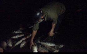 Kiểm tra, xác minh nhóm người vớt cá chết ở hồ Linh Đàm trong đêm