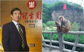 Doanh nhân chết thảm khi đi du lịch vì bị khỉ ném đá