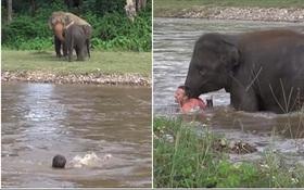 Tưởng huấn luyện viên bị chết đuối, chú voi con vội vàng lao xuống sông cứu người