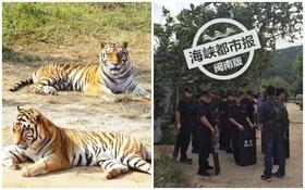 Trung Quốc: Hổ sổng chuồng khiến người dân lo sốt vó