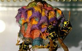 Bí quyết độc đáo của người chuyên đi xây tổ ấm cầu vồng cho ong