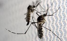 Trung Quốc xác nhận ca nhiễm virus Zika đầu tiên ở Bắc Kinh