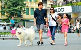 """Chó không rọ mõm được thả rông khắp phố đi bộ: """"Người và nhất là trẻ em phải được ưu tiên chứ không phải chó"""""""