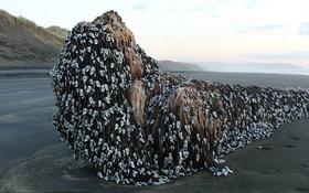 """""""Quái vật"""" dạt vào bờ biển tại New Zealand trông không khác gì sinh vật ngoài hành tinh"""