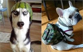 Nếu đám cún ở nhà dùng Facebook thì mọi chuyện sẽ ra sao nhỉ?