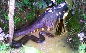 Cận cảnh quái vật sông Amazon hung bạo nhất hành tinh