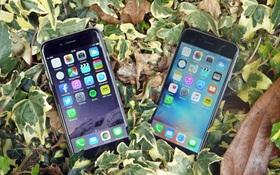 Giá chính hãng những chiếc iPhone tốt nhất tại Việt Nam đang giảm mạnh