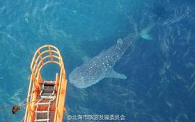2 ngư dân bị bắt giữ sau khi cái chết của chú cá mập voi gây phẫn nộ toàn thế giới