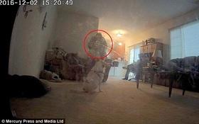 Chú chó rúm ró khi nhìn thấy bóng đen bà cụ bay lơ lửng trong phòng không người