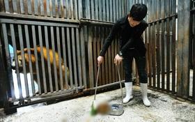 Không tin nổi ở Trung Quốc người ta tranh nhau chi tới 3 triệu đồng để được đi hót phân cho Gấu Bắc Cực