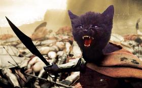 Đang buồn đang chán, 10 bức ảnh chế chú mèo đen khó tính này sẽ giúp bạn cười không ngớt