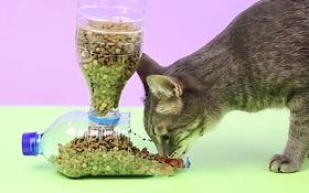 Tự làm hệ thống đựng thức ăn thông minh cho mèo cưng chỉ với 2 chai nhựa