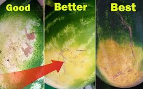 Summer hacks: 5 điểm trên quả dưa hấu giúp bạn chọn được một quả dưa ngọt lịm, mọng nước