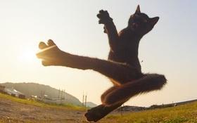Chụp lén các boss mèo tập võ luyện chưởng như phim kiếm hiệp