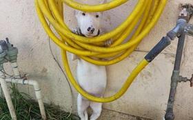 17 chú chó hèn nhát không sợ trời, không sợ đất, còn lại thì cái gì cũng sợ
