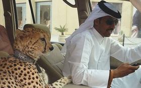 12 minh chứng cho thấy Dubai không chỉ giàu mà còn sở hữu những thứ siêu độc đáo