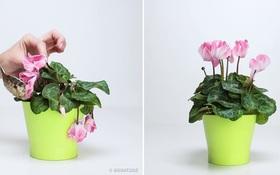 ''Ảo thuật'' biến hoa đang héo trở nên tươi rói với toàn nguyên liệu dễ tìm