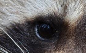 Nhìn ảnh cận cảnh, đoán xem đây là loài động vật nào?