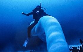 """Tận mắt xem loài giun khổng lồ mà cá mập cũng phải gọi là """"sư phụ"""""""