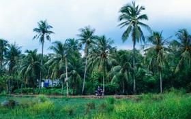 Chùm ảnh: Cuộc sống ở bán đảo Thanh Đa - Một miền nông thôn tách biệt dù chỉ cách trung tâm Sài Gòn vài km