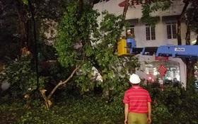 Hà Nội: Cây xanh gãy đổ đè vào xe và người đi đường sau mưa giông gió lớn