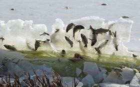 Khổ thân 9 con vật không chui vào tủ lạnh cũng tự dưng bị đóng băng