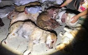 Trung Quốc: Hàng loạt chú chó hoang bị lực lượng trật tự đô thị đánh đập tới chết