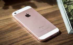Đây là thông tin rất buồn cho những ai đang muốn sở hữu một chiếc iPhone màn hình nhỏ