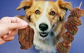 Ai mà ngờ được cách nuôi chó của chúng ta đang khiến Trái đất nóng lên từng ngày
