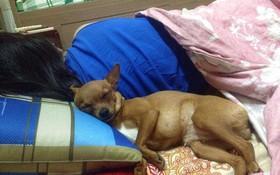 Lạnh lắm rồi, mấy con boss nhất quyết lên giường ăn ngủ cùng sen cho ấm