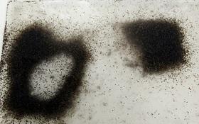 """Công ty """"chị em"""" của Google sắp thả 20 triệu con muỗi ra càn quét nước Mỹ"""