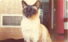 Đã từng có một nghiên cứu cực kỳ quan trọng, nhưng tác giả của nó là... một con mèo