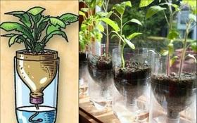 Biến hóa vỏ chai thành chậu trồng cây xinh xắn dành riêng cho những ai lười tưới nước