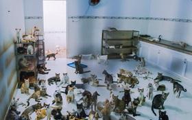 Người phụ nữ hy sinh 20 năm tuổi xuân để cưu mang hàng trăm chú mèo hoang ở Sài Gòn