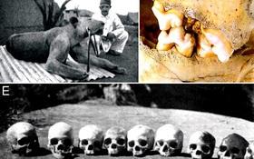 """Bí ẩn """"quái vật ăn thịt người"""" cuồng sát ở Tsavo cuối cùng cũng được giải mã"""