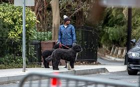 Rời Nhà Trắng, 2 chú chó cưng nhà Tổng thống Barack Obama đã quen với cuộc sống mới