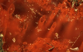 Tìm ra bằng chứng lâu đời nhất về sự sống trên Trái đất, vượt xa quan niệm từ trước đến nay: 3.770.000.000 năm!