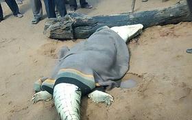 Người dân phẫn nộ giết chết quái vật cá sấu khổng lồ ăn thịt bé trai 8 tuổi