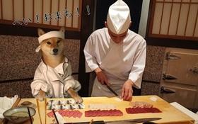 """9 bức ảnh chế chú chó đầu bếp """"siêu bựa"""" này sẽ khiến bạn cười nghiêng ngả"""