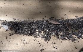 Hạ gục 4.000 cá thể muỗi trong 1 đêm chỉ với chiếc quạt và chú chó, bạn tin không?