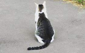 Chú mèo sở hữu vết bớt hình mèo béo trên lưng